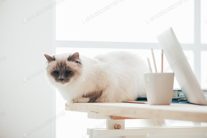 Lovely cat sitting on the desk