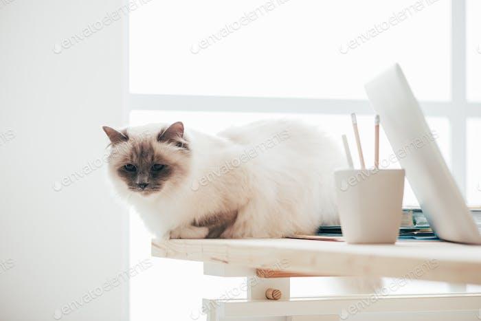 Schöne Katze sitzt auf dem Schreibtisch