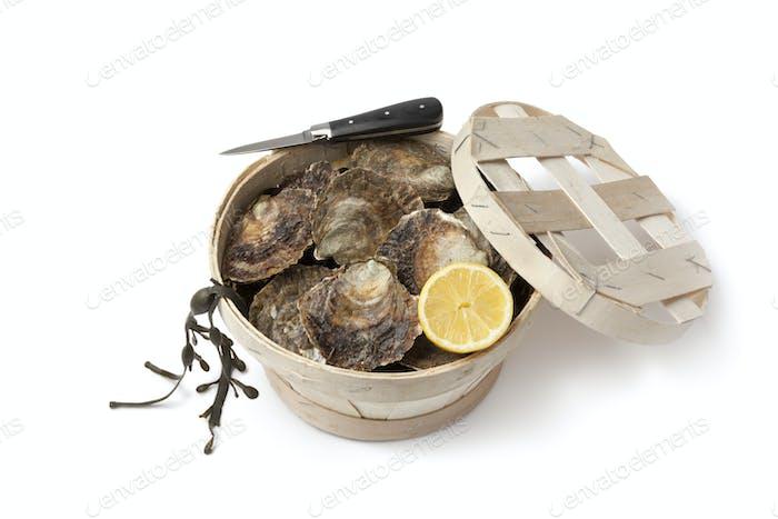 Fresh European flat oysters in a basket