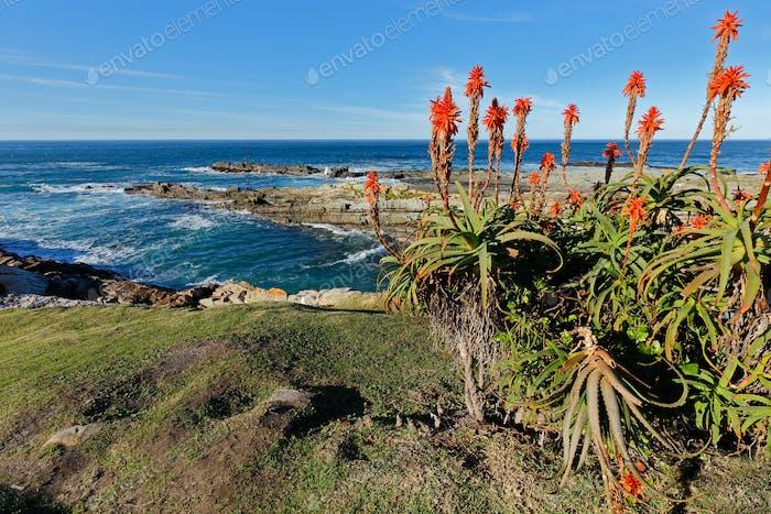 Scenic coastline - South Africa