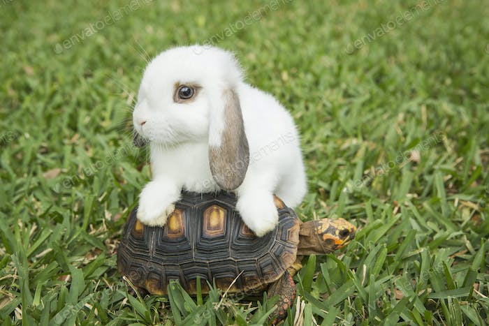 A small tortoise and a white rabbit on the grass.