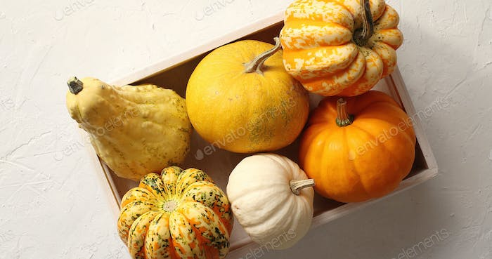 Different pumpkins laid in box