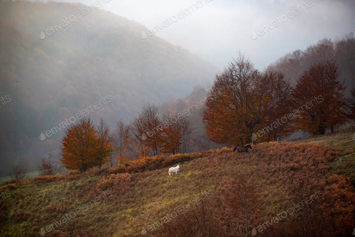 Rural scene with haystacks and grazing horse on pasture.