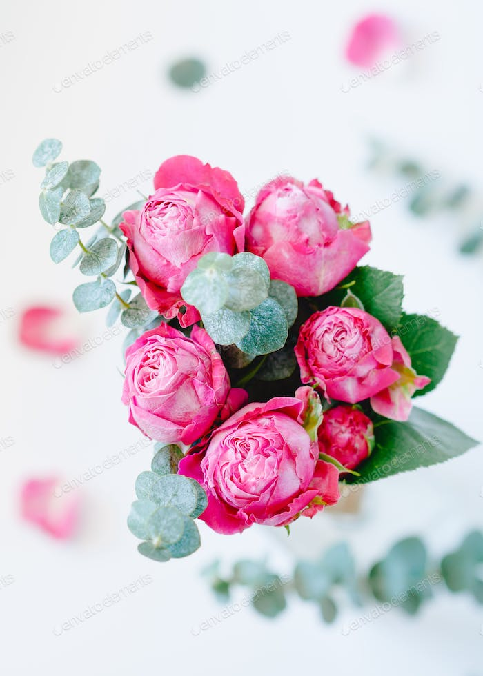 Still life of a bouquet of pink roses and eucalyptus inside on white background.