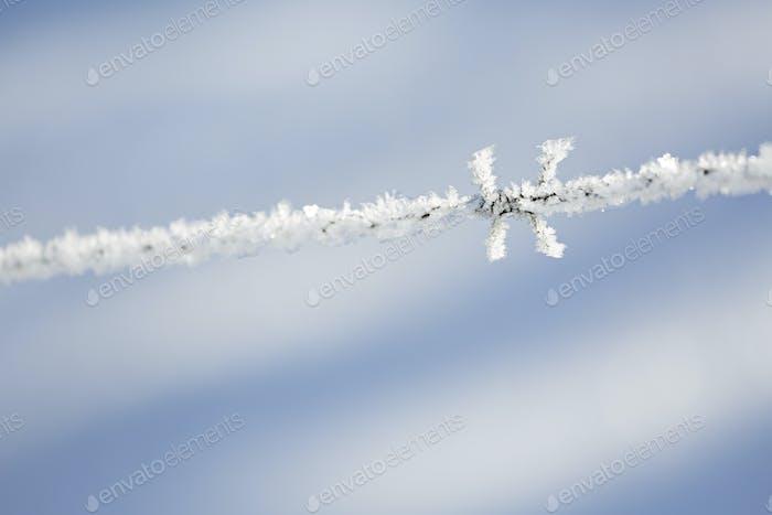 Eiskristalle auf Stacheldraht