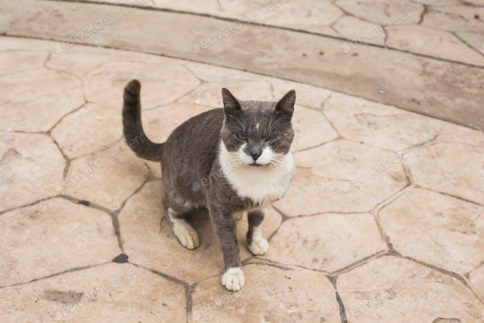 Konzept der obdachlosen Tiere - Streunende Katze auf der Straße
