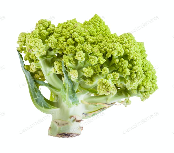 side view of fresh romanesco broccoli isolated