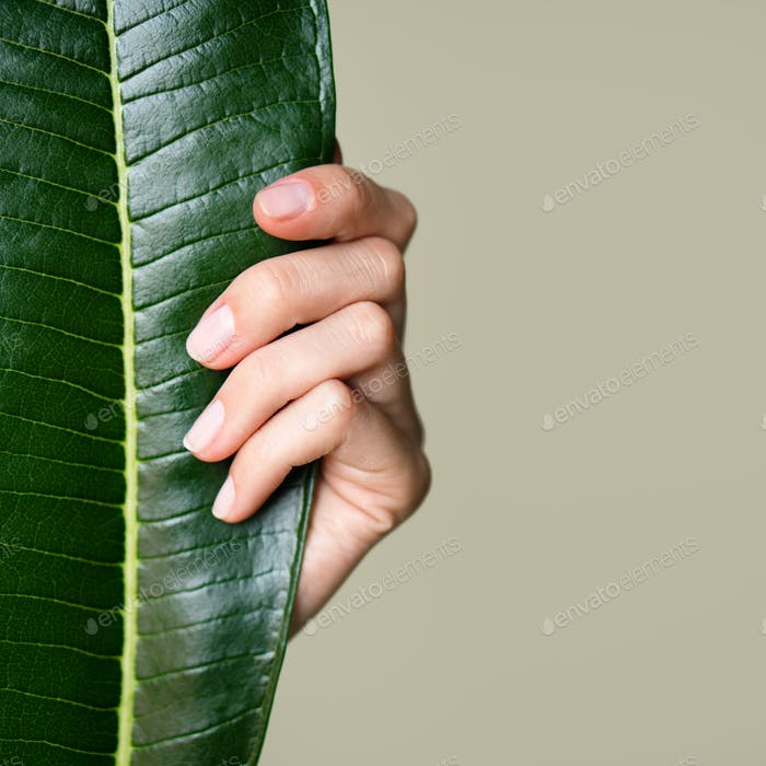 Beautiful Female Hand Hold A Green Leaf. Nails And Manicure. Olive Background.