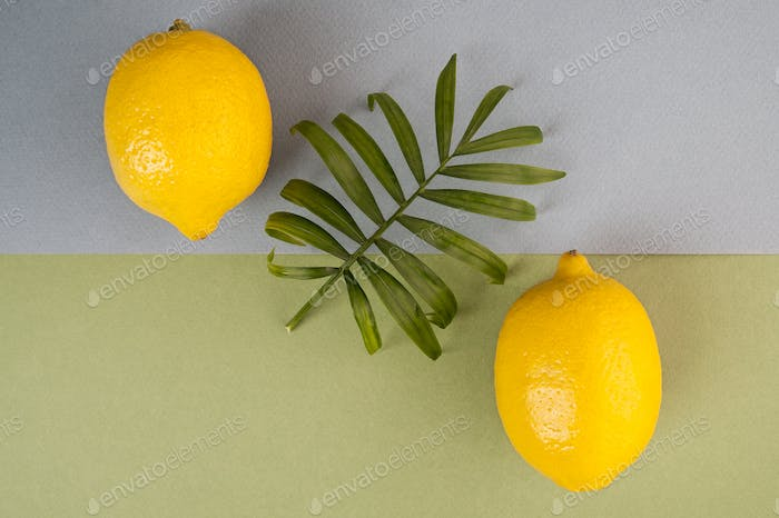 Two ripe lemons and a green leaf on a blue-green pastel backgrou