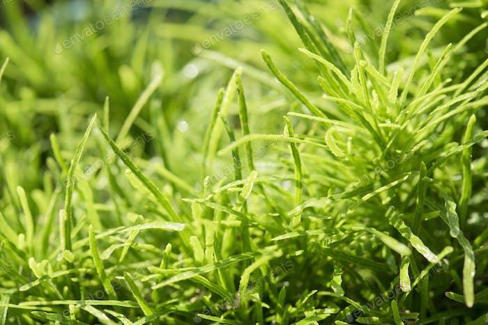 Closeup of grass field