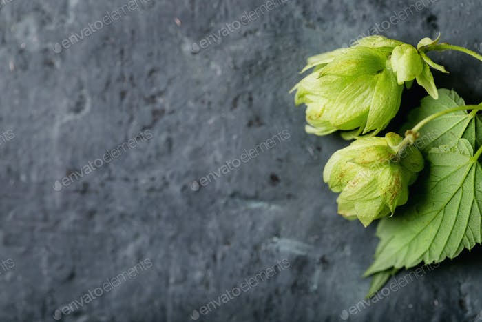 Green fresh hops
