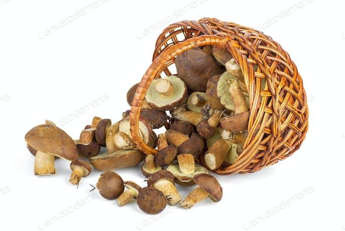 Basket and cepe mushrooms