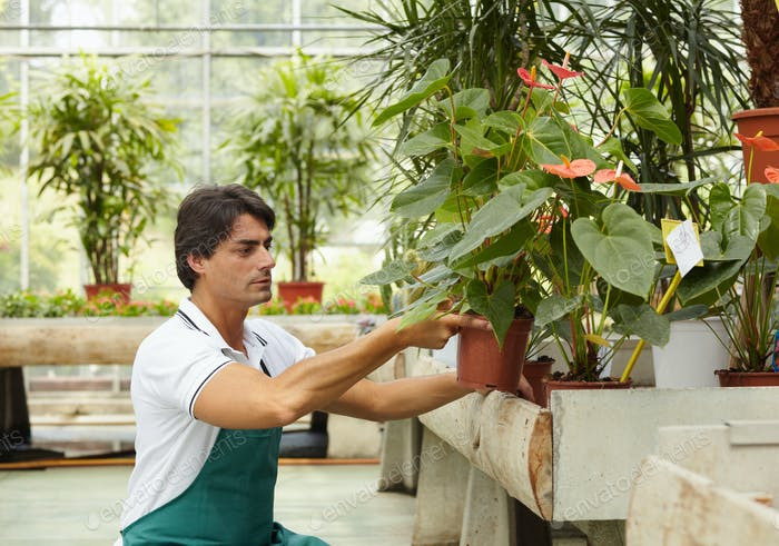 Portrait Of Man Working As Florist In Flower Shop Arranging Plants