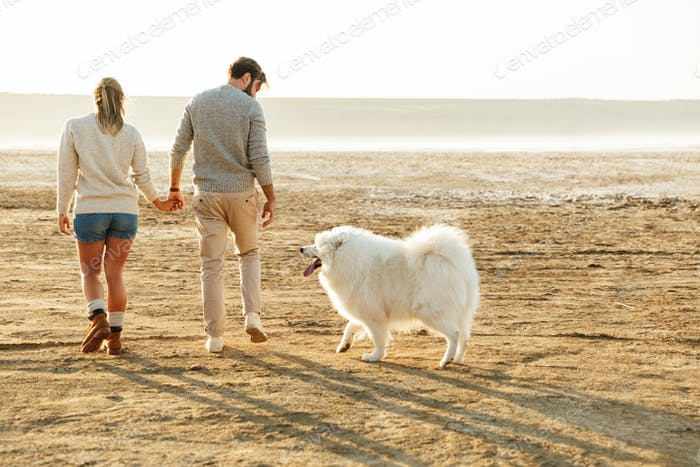 Couple outdoors at beach walking with dog samoyed.