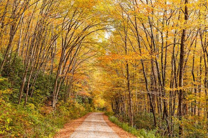 Waldstraße in der Herbstsaison
