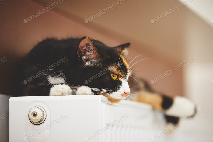 Katze auf dem Heizkörper