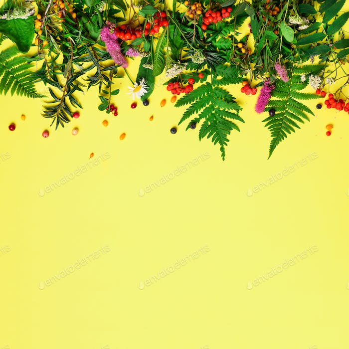 Wild healing herbs on pastel yellow background. Alternative medicine concept, holistic approach. Top