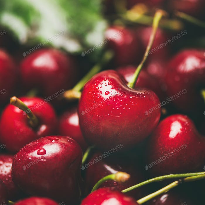 Fresh sweet cherry texture, wallpaper and background, close-up, square crop
