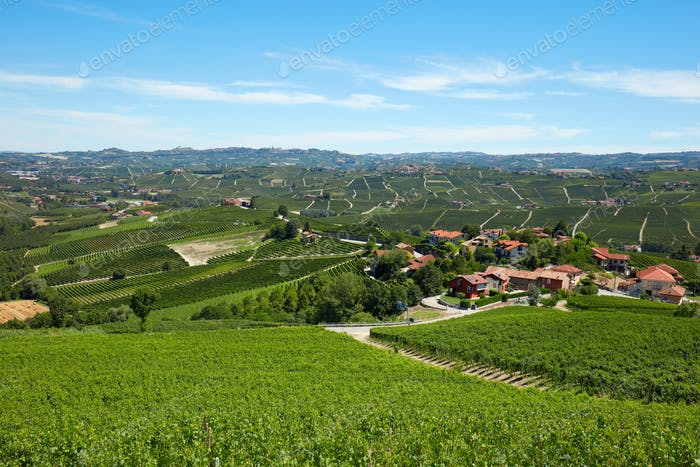 Green vineyards, Piedmont landscape in a sunny day, blue sky