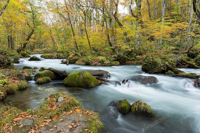 Oirase Stream flowing through the autumn forest