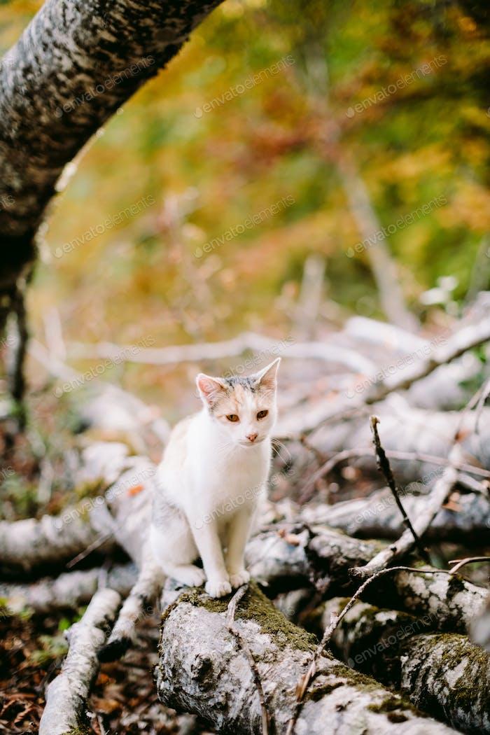 Pretty kitten portrait