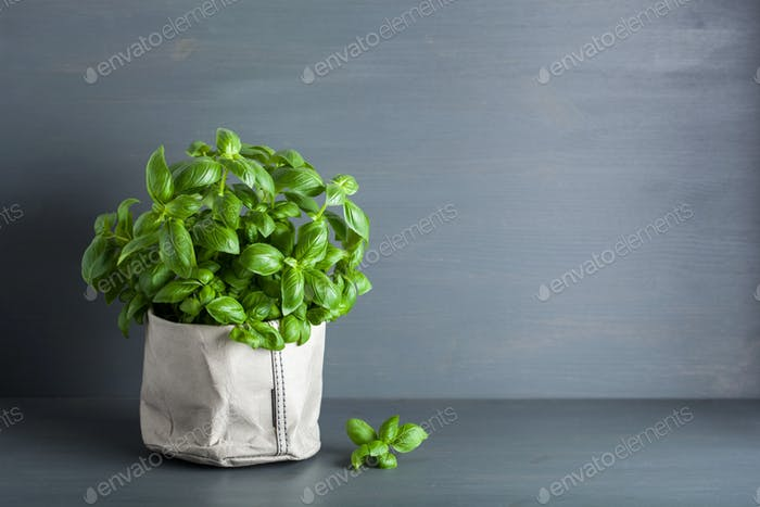 fresh basil herb in paper bag pot