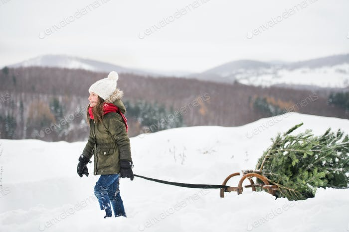 A small girl pulling a Christmas tree in forest.