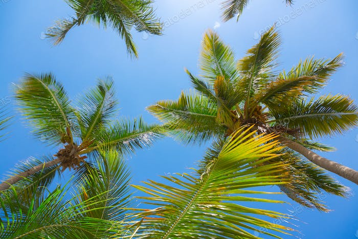 Palm trees leaves, low angle view against blue sky