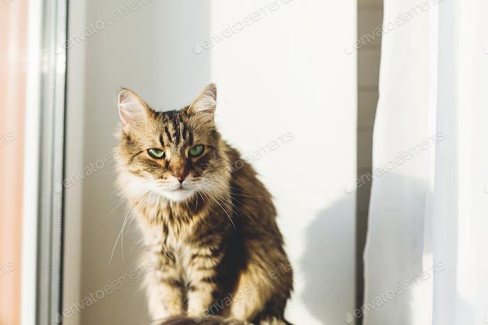 Süße Tabby Katze sitzt auf Fensterbank in warmem, sonnigem Licht unter grünen Pflanzen