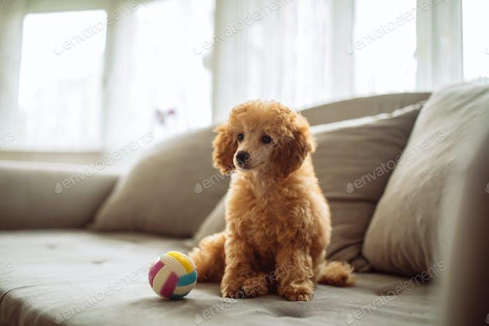 Cutest doggy ever !