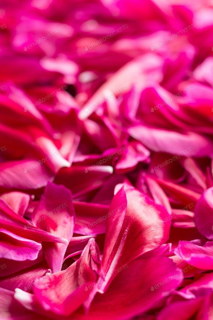 The peony petals.