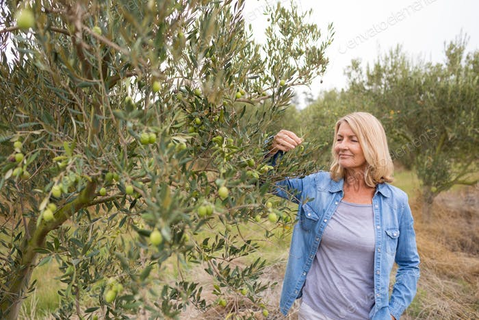Female farmer checking a tree of olives