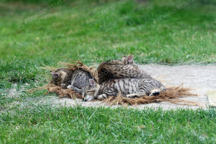 Sleeping cat with kittens