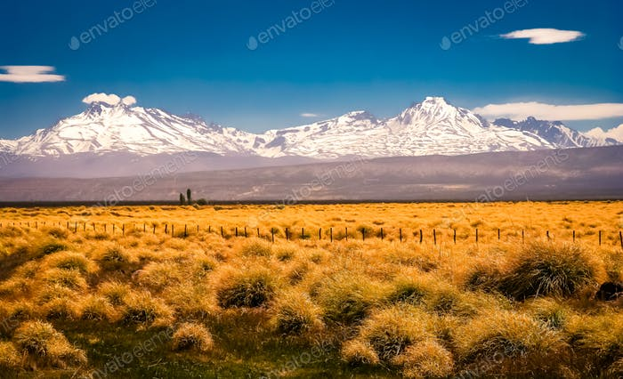Patagonian grassland and Andes