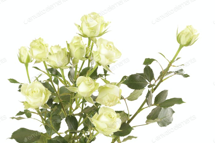 White roses flower bouquet on white background. Isolated.