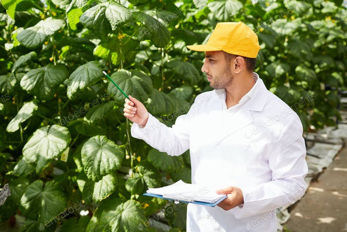 Carrying out quality control of vegetable plants