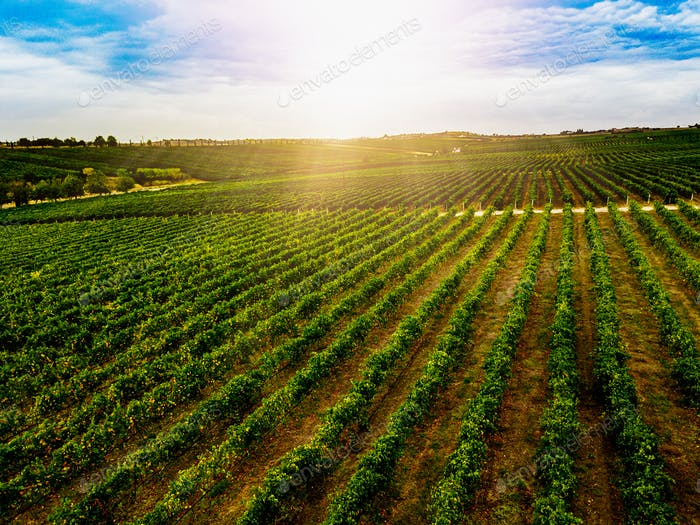Aerial view of beautiful Vineyard landscape in Greece.