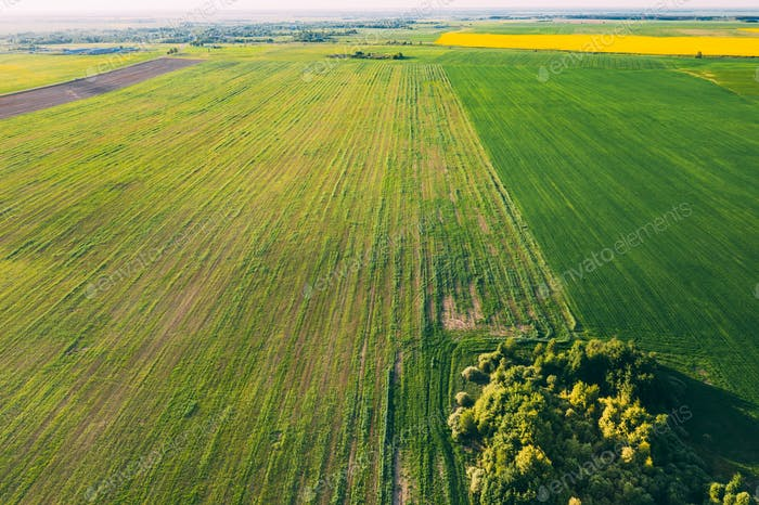 Aerial View Green Spring Field Landscape With Trails Lines. Top View Of Field With Growing Young