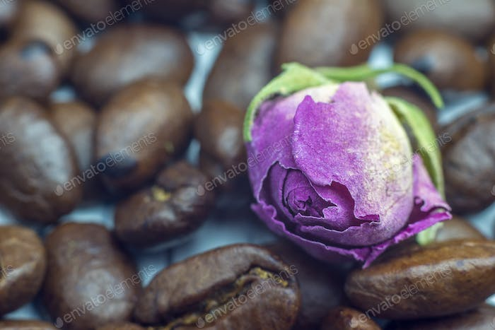 Good morning spirit. Coffee beans and tender rose close up, selective focus