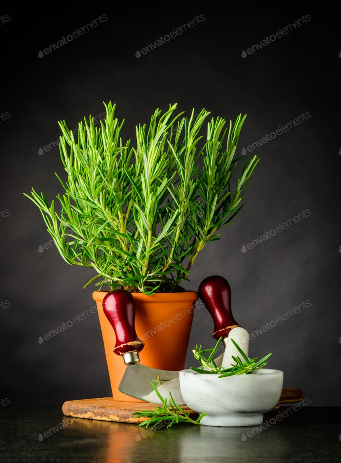 Rosemary Herb with Mezzaluna and Pestle and Mortar
