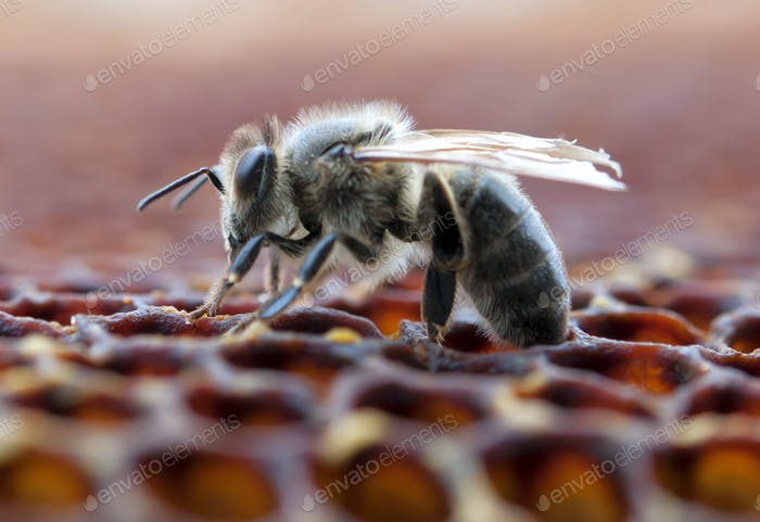working bee