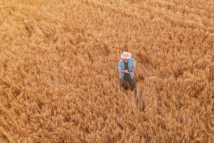 Wheat farmer with drone remote controller in field