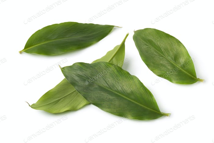 Green cardamom leaves