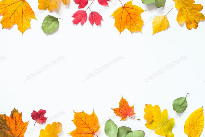 Autumn flat lay background with leaves on white