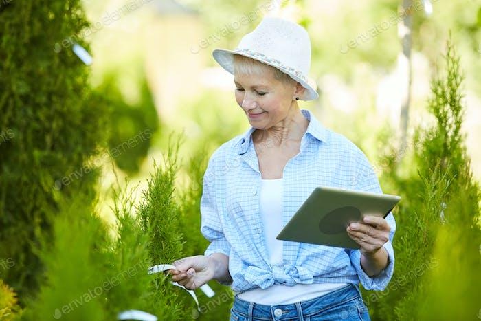 Female Gardener Working at Tree Farm