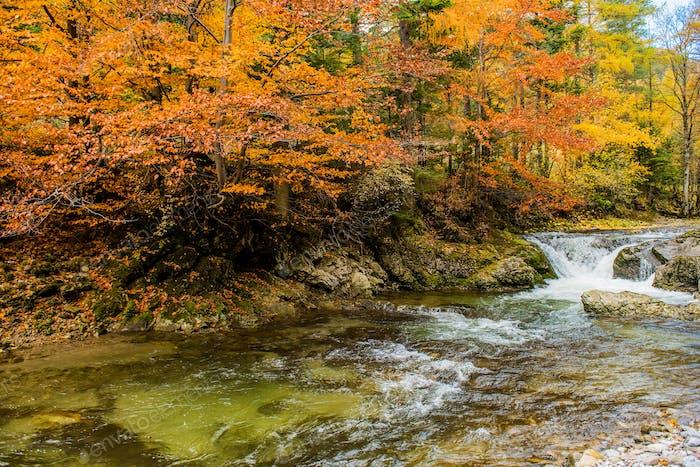 Fall Foliage Mountain River