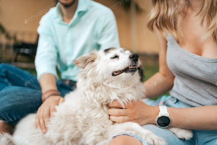 Happy dog portrait with his humans