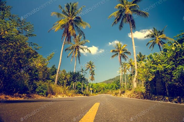 Ницца asfalt дорога с пальмами