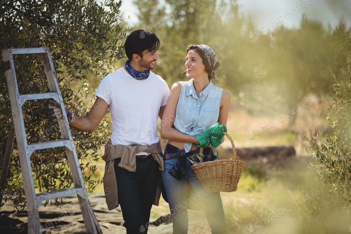 Young couple standing by ladder at olives farm