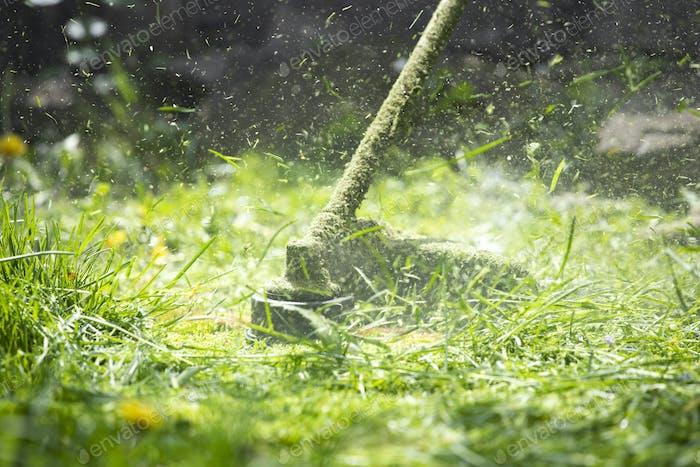Ein Rasenmäher schneidet grünes Gras